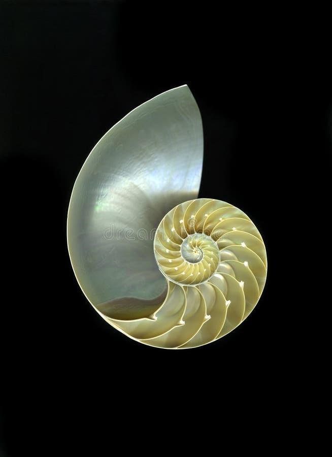 nautilusskal fotografering för bildbyråer