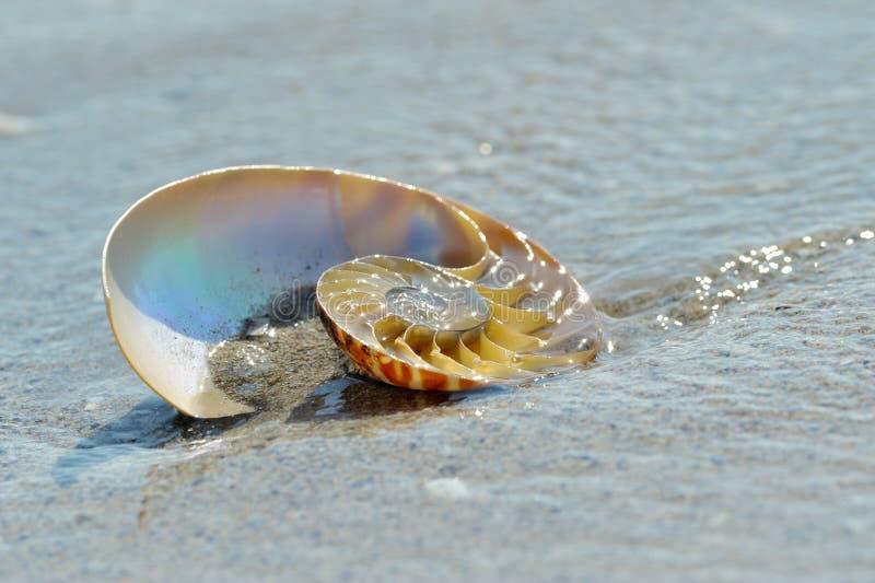 Nautilusskal på våt sand fotografering för bildbyråer