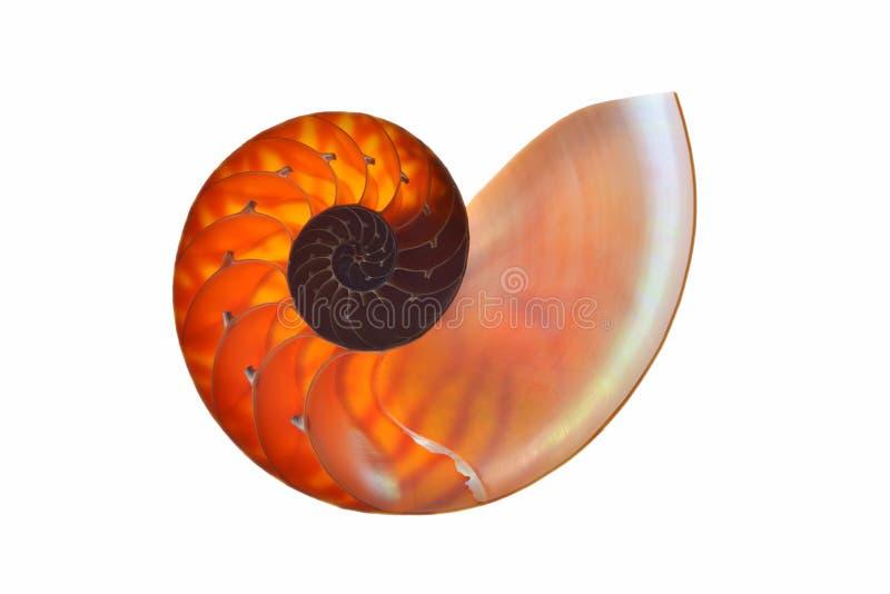 Nautilusskal som isoleras på vit bakgrund arkivfoton