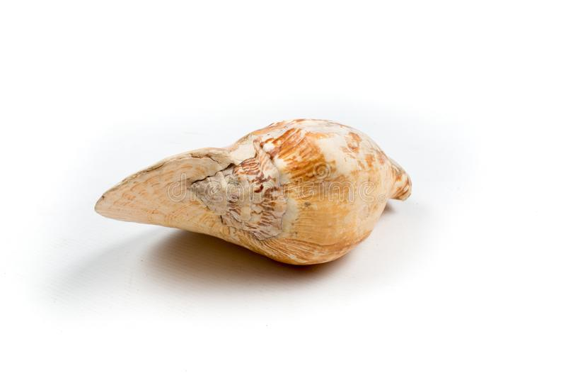 Nautilusskalet som isoleras på vit bakgrund arkivfoton