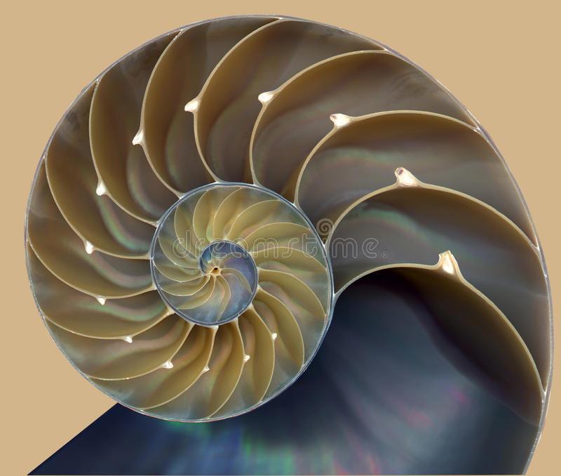 Nautilusskalmodell arkivbild