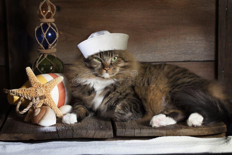 Nautisk katt arkivbilder