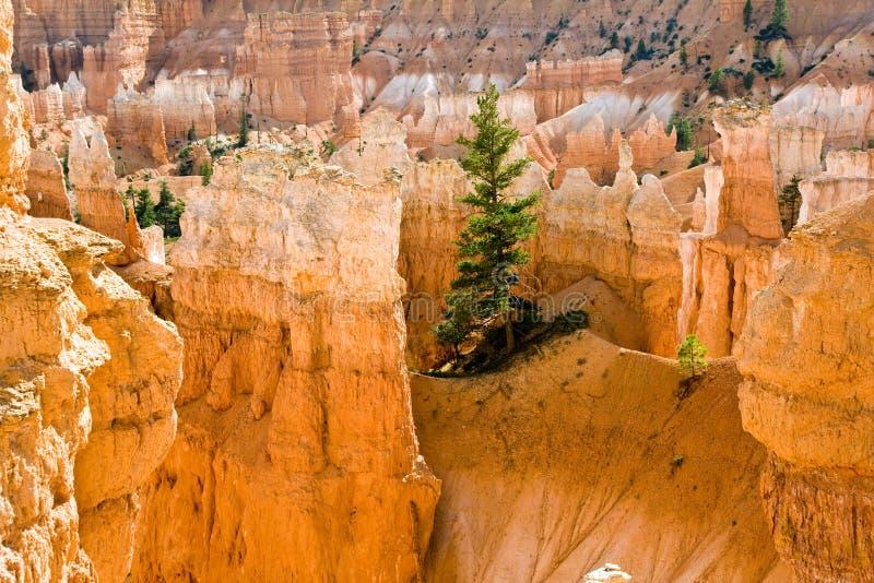 Navajo pętli ślad - Wall Street: Bryka jaru park narodowy zdjęcie stock