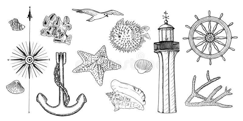 Naval set nautical symbols. Gulls, helm, steering wheel, anchor, light house, coral, shell, wind rose, swellfish, sea vector illustration