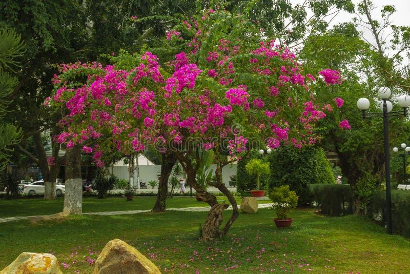 nave Árvore Hortaliças com flores fotografia de stock royalty free