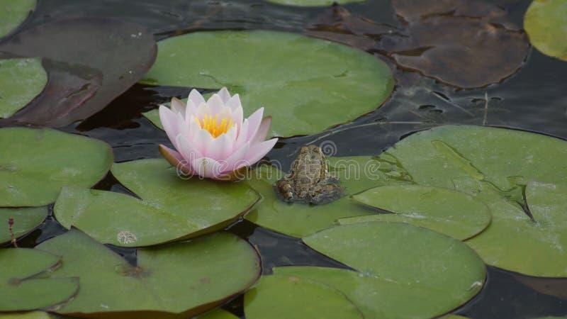 Download Nave foto de stock. Imagem de animais, flor, água, anfíbio - 80100174