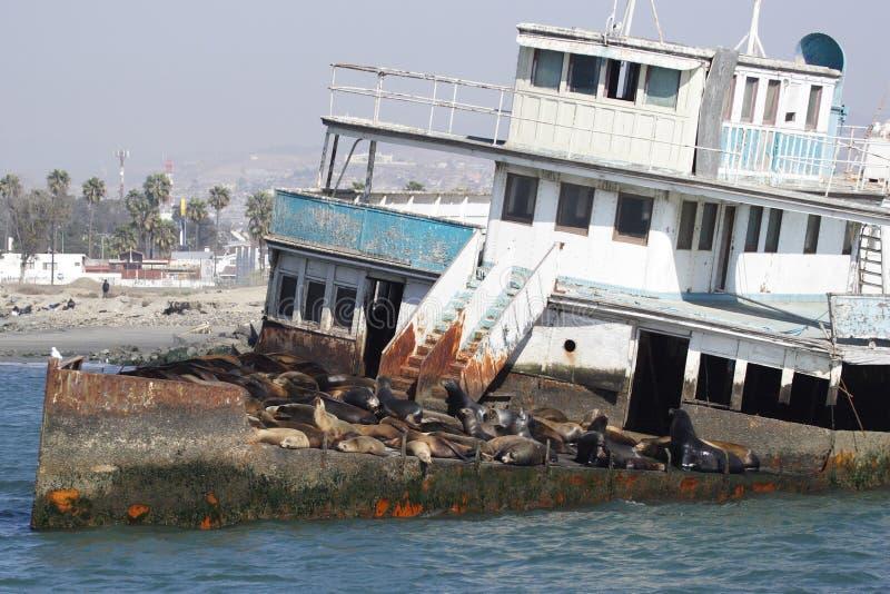 Nave abandonada con los leones de mar imagen de archivo libre de regalías