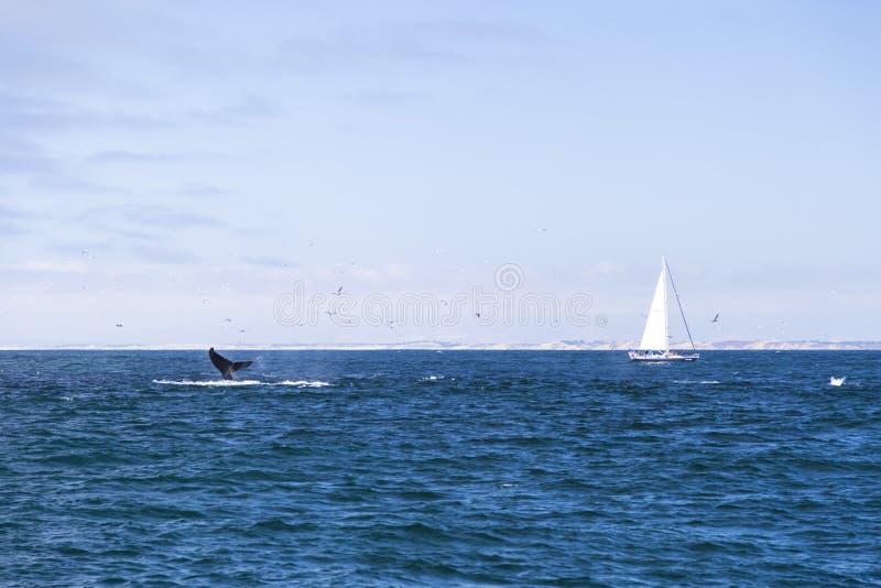 Navegación aislada del yate en el Océano Atlántico azul cerca de Monterey, California fotografía de archivo