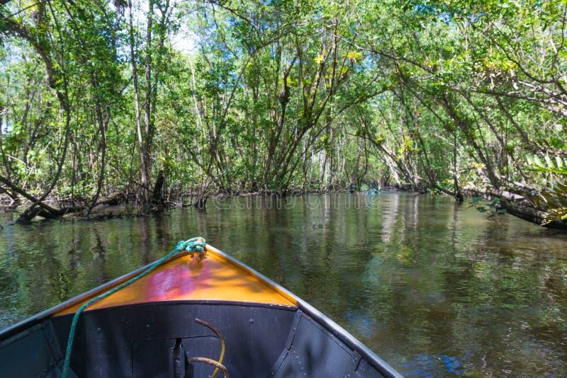 Navegación del bote pequeño en el agua verde de los mangles imagenes de archivo
