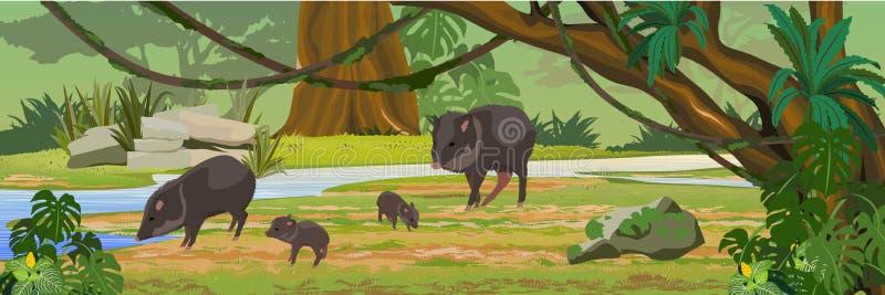 Navelsvinfamilj nära floden i djungeln En tropisk skog stock illustrationer