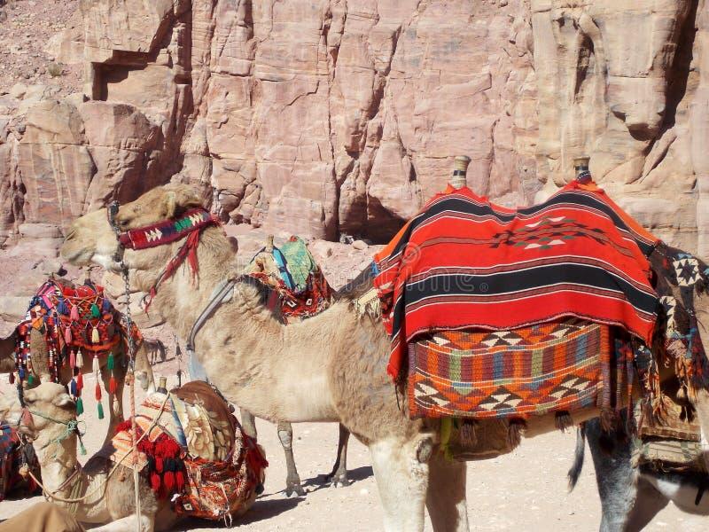 Naves del desierto, Jordania foto de archivo libre de regalías