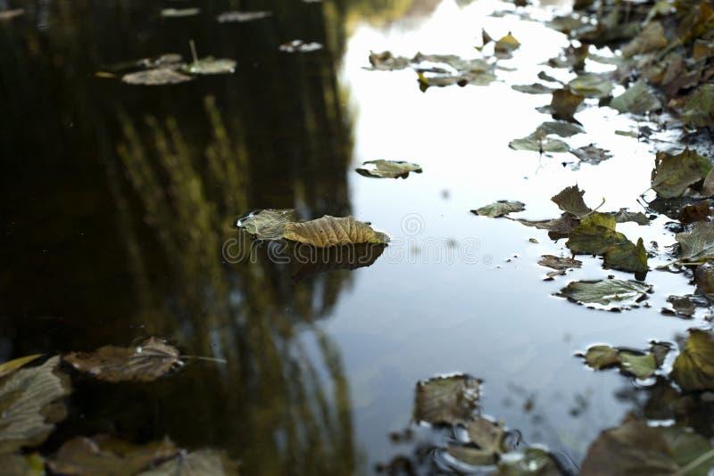 Navi dorate sul lago fotografie stock