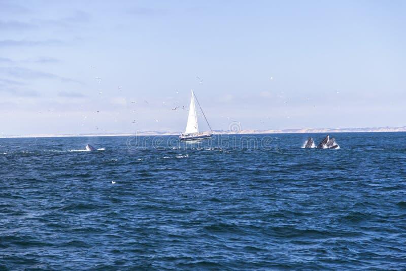 Download Navigação Isolada Do Iate No Oceano Atlântico Azul Perto De Monterey, Califórnia Foto Editorial - Imagem de aquático, barco: 65576271