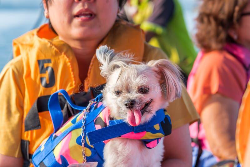 Navigation de femme et de chien sur la rivière en le bateau de longue queue photos libres de droits