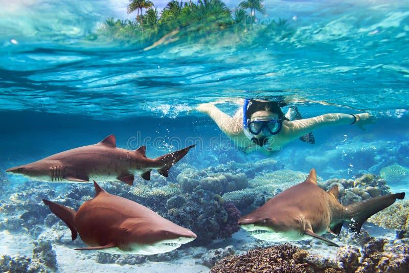 Naviguer au schnorchel avec les requins de taureau dangereux images libres de droits