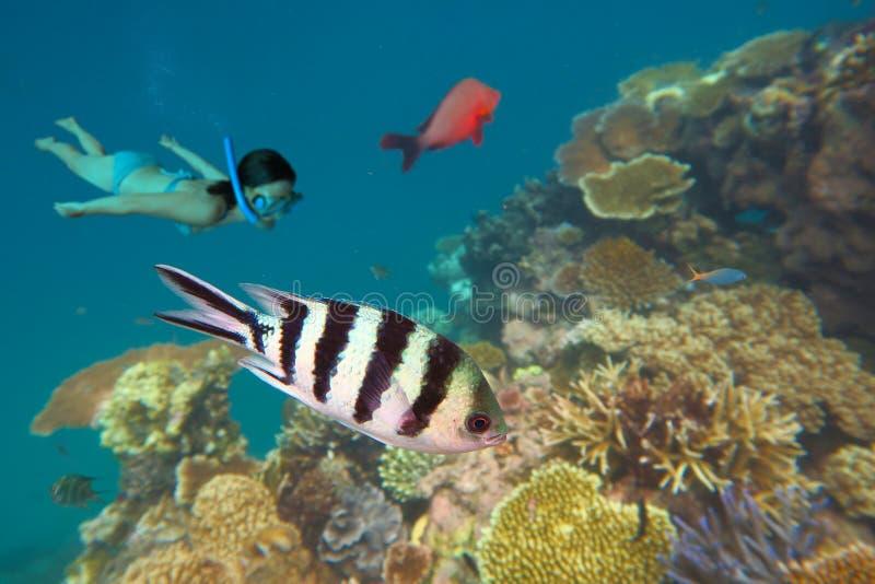 Naviguer au schnorchel dans l'Australie de la Grande barrière de corail Queensland photographie stock