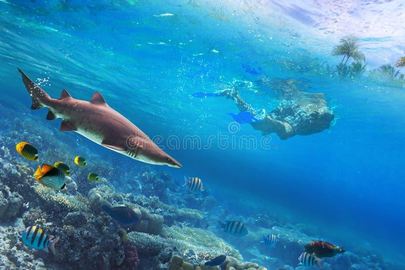 Naviguer au schnorchel dans l'eau tropicale photos libres de droits