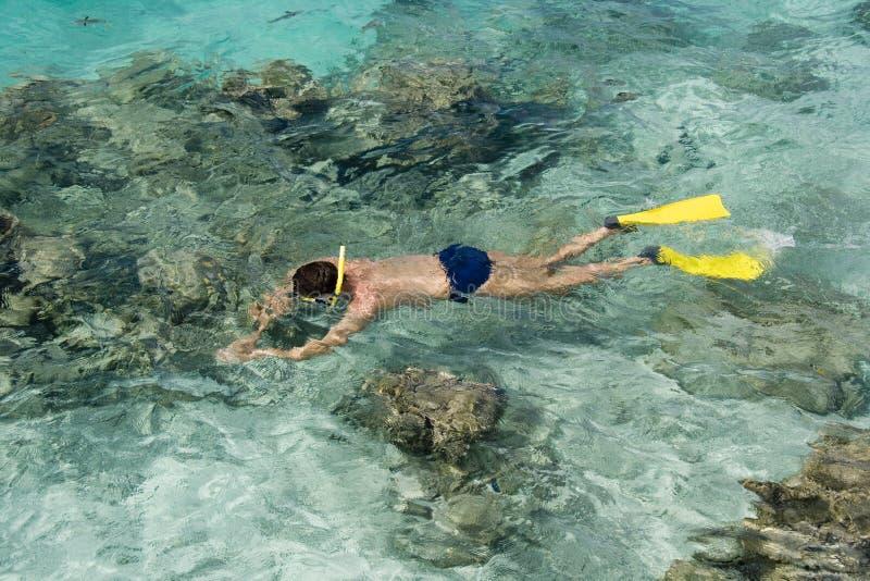 Naviguer au schnorchel sur un récif tropical photo stock