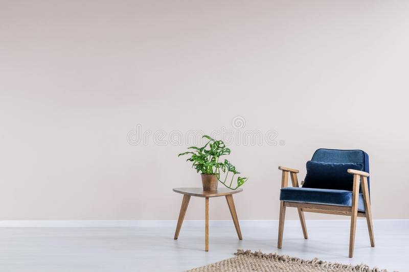 Navy blue armchair with wooden frame in a trendy living room interior with an empty pink wall and copy space for a bookcase. Real. Photo royalty free stock images