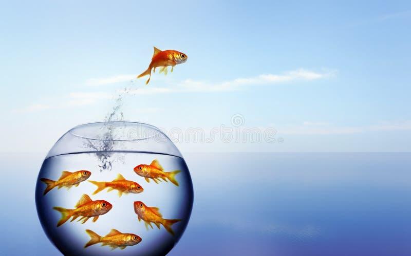 nawadniać goldfish doskakiwanie nawadnia zdjęcia royalty free