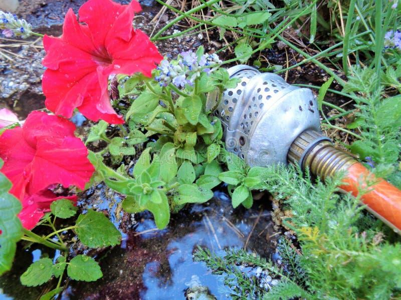 Nawadniać ogród z Starym Wodnym Bubbler obrazy royalty free