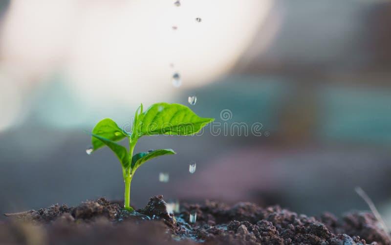 Nawadniać rośliny fotografia royalty free