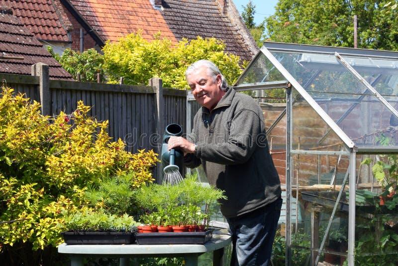Nawadniać rośliny. zdjęcia stock