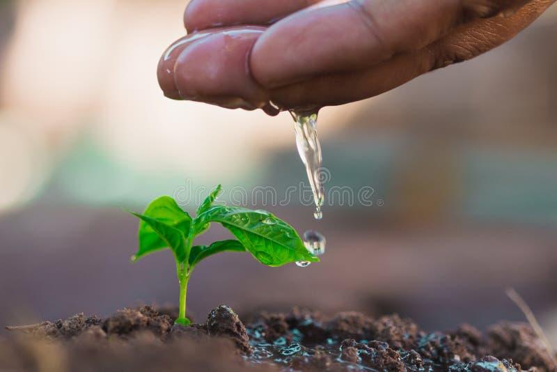 Nawadniać rośliny, makro-, pojęcie obraz stock