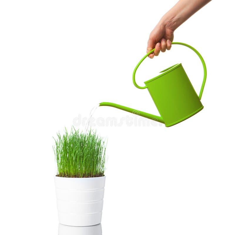 Nawadniać zielonej trawy z podlewanie puszką zdjęcia royalty free