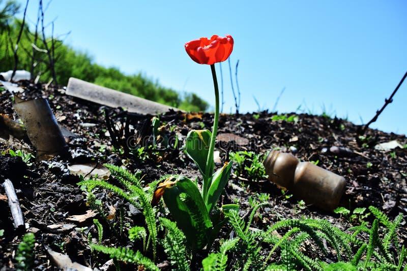 Nawet gdzie osoba niszczy, natura może reprodukować piękno! zdjęcie stock