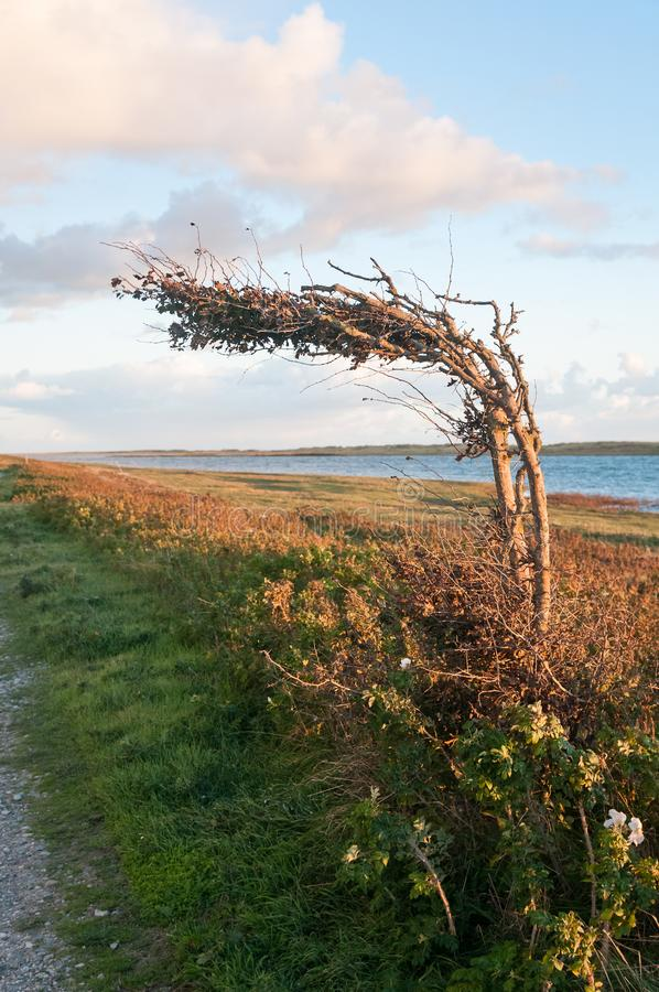 Nawet kózki skaczą na połogim drzewie zdjęcie stock