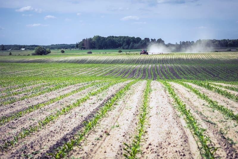 Nawet rzędy kukurudza i natryskownica w odległości która przedstawia chemię przeciw świrzepom, zdjęcia royalty free