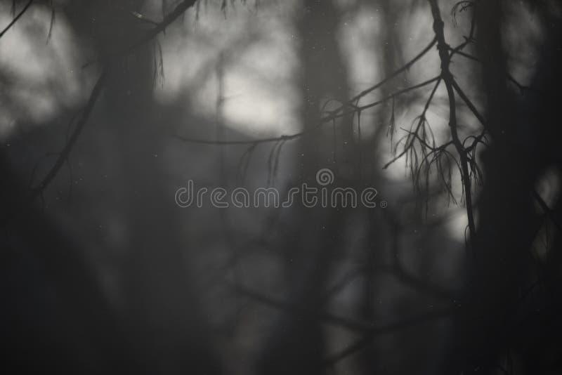 Nawiedzać nagie gałąź na ponuractwie zdjęcie royalty free