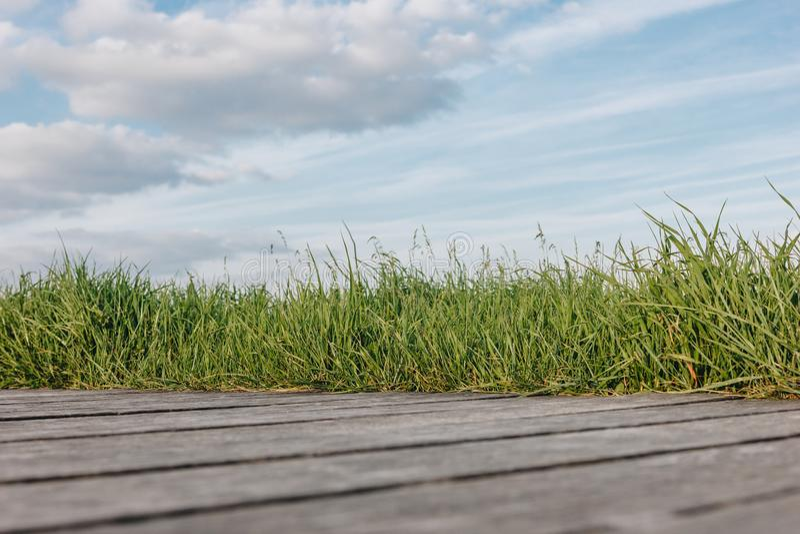nawierzchniowy poziom drewniany przejście i zielona trawa fotografia royalty free