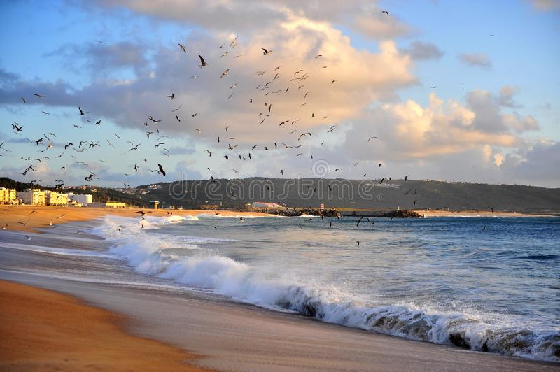 Nazare sand beach on sunset, Portugal royalty free stock image