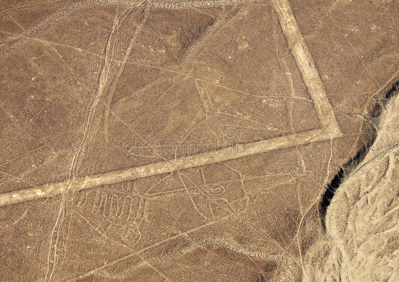 Nazca lines - Whale royalty free stock images