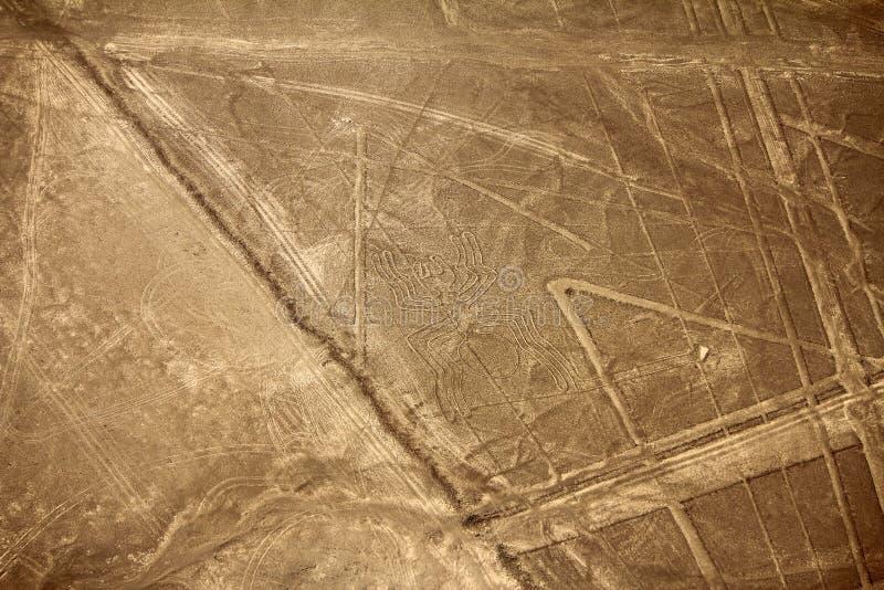 Nazca-Linien - Spinne stockfotos