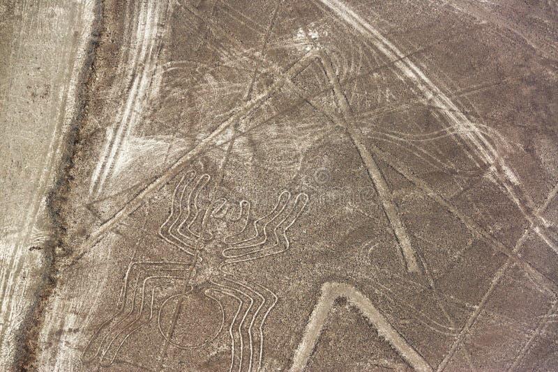 Nazca zeichnet Spinne lizenzfreie stockfotografie
