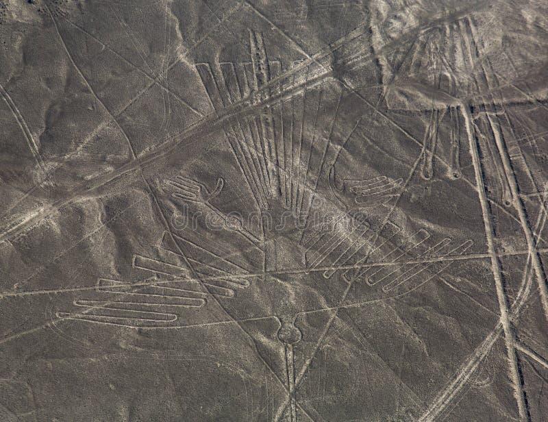 Nazcalijnen - de Condor royalty-vrije stock afbeeldingen
