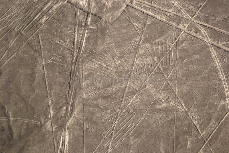Nazcalijnen in Peruviaanse woestijn stock afbeelding