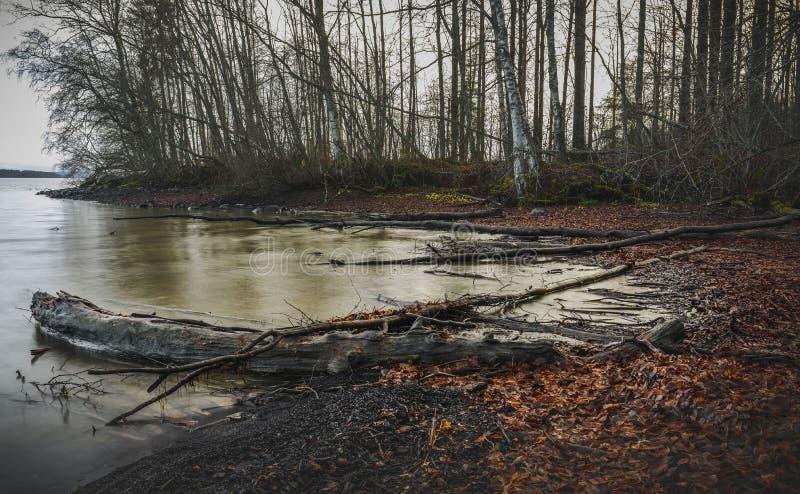 Nazwa użytkownika jesień widoku nadjeziorny krajobraz fotografia royalty free