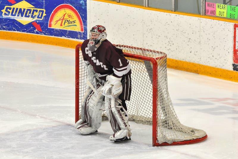 ncaa för hockey för alex colgate evinlek royaltyfri bild