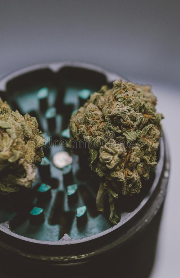 NClose-up of buds of marijuana lying on a metal grinder. Insta size for publication in stories stock photography
