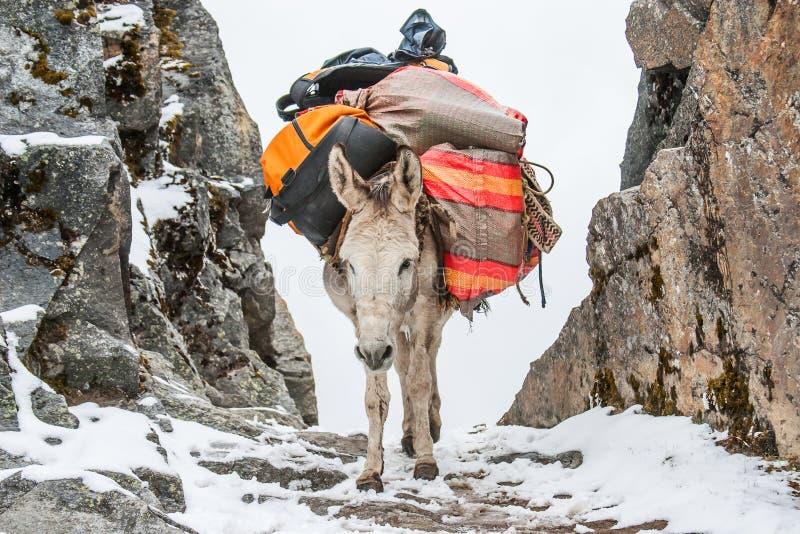 Âne avec une charge sur un voyage montagneux images libres de droits