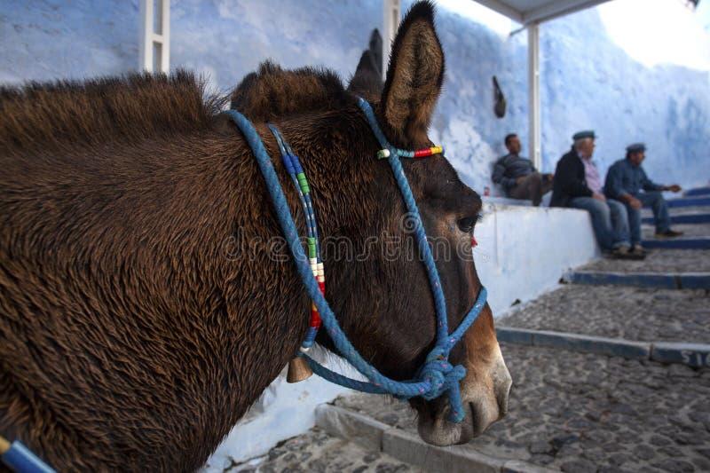 Âne de Santorini - symbole de l'île Santorini, Thira, Grèce Âne dans Fira sur Santorini dans l'égéen Grec traditionnel images libres de droits