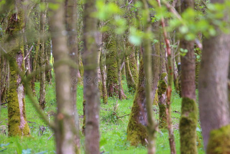 Ne peut pas voir le bois pour les arbres photo libre de droits