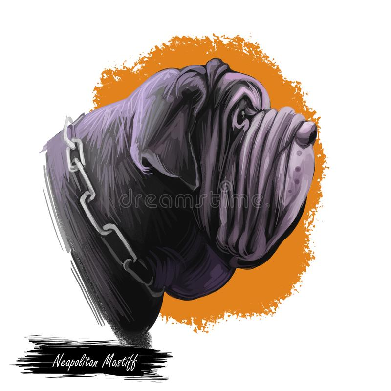 Neapolitan mastiff dog of Italian origin wearing collar in form of chain digital art. Isolated pet watercolor portrait vector illustration