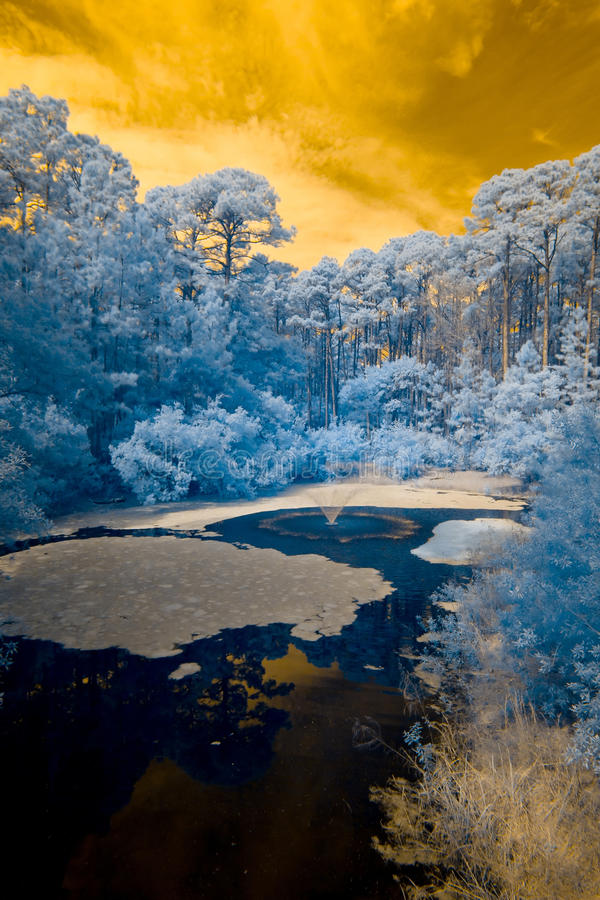 Infrared view of forest and water royalty free stock images