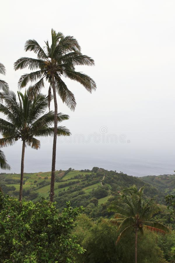 Near Mount Pelee - Martinique stock photography