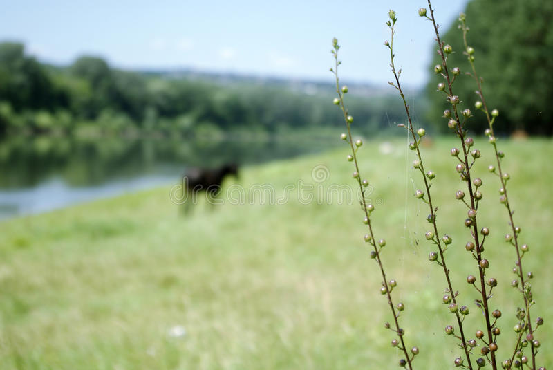 Download Near the river stock photo. Image of rest, trees, wildlife - 33438342